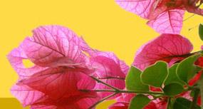 Ayurveda in Sri Lanka mit Ayurveda-Kuren, Behandlungen, Massagen, Therapien zur Entspannung im Ayurveda-Kurzentrum in Sri Lanka. Bietet Ayurveda Behandlungen von  Allergische Erkrankungen, Bronchitis - Ayurveda-Kur Kuren in Sri Lanka, 4