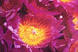 Ayurveda in Sri Lanka 2